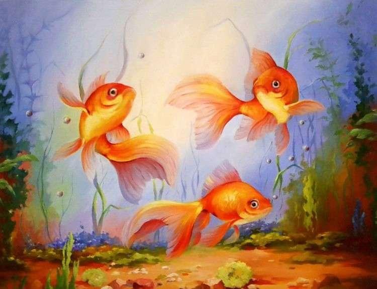 Золотые рыбки, уход и содержание